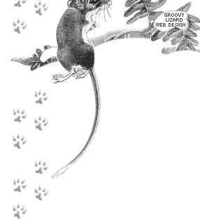 abracadab 39 rats tout sur le rat domestique theme by groovy lizard. Black Bedroom Furniture Sets. Home Design Ideas